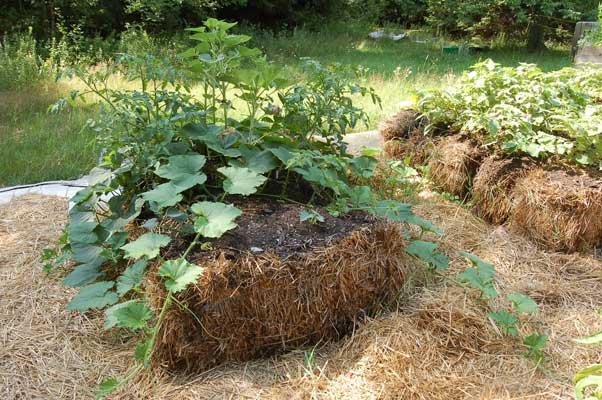 jardinage sur bottes de paille - UPVD