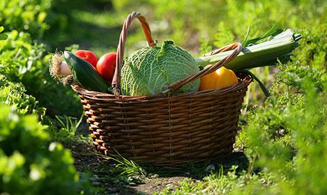 Cuisine végétarienne - UPVD